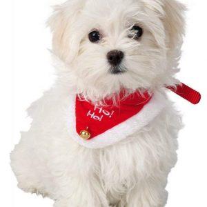 collar perro navidad